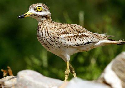 Ornitologia_12