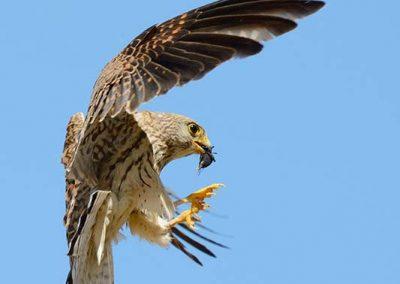 Ornitologia_13