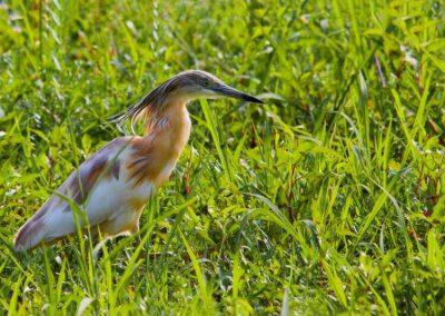 Ornitologia_15