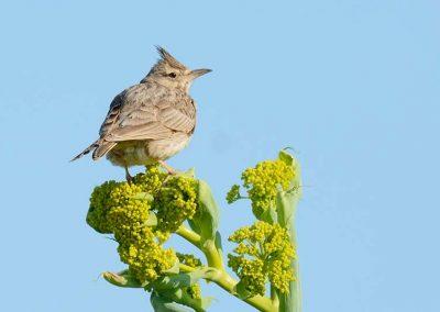 Ornitologia_17