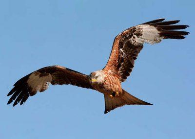Ornitologia_18