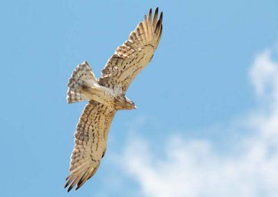 Ornitologia_19