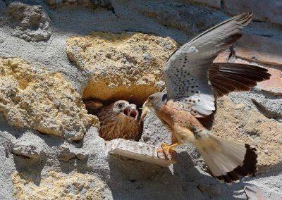 Ornitologia_2