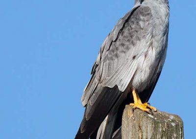 Ornitologia_20
