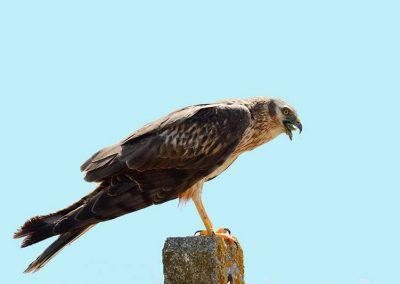 Ornitologia_21