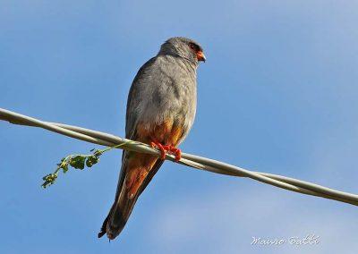 Ornitologia_22