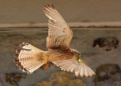 Ornitologia_3