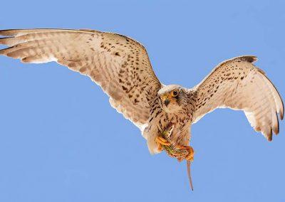 Ornitologia_7