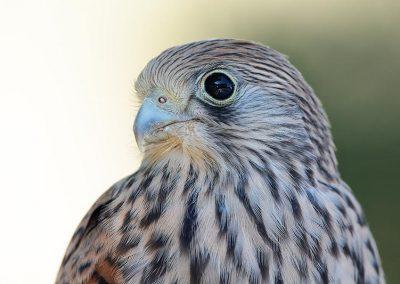 Ornitologia_8