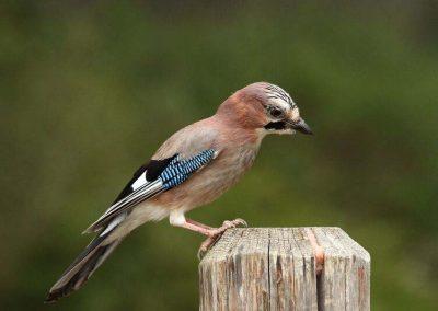 Ornitologia_9