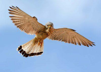 Ornitologia_A