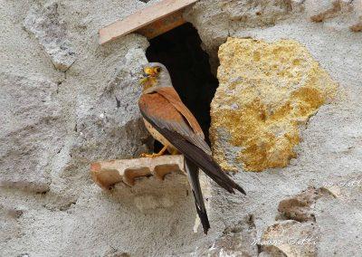 Ornitologia_B